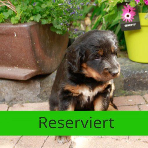 Bounty_von_der_Bienenweide_reserviert